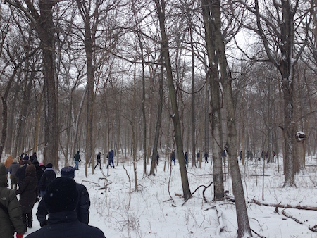 Soundwalk in Ryerson Woods